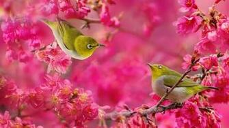 Birds and Flowers Wallpaper Live HD Wallpaper HQ Pictures