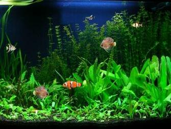 Screenshot   Aquarium Fish Screensaver   Nature Screen Savers