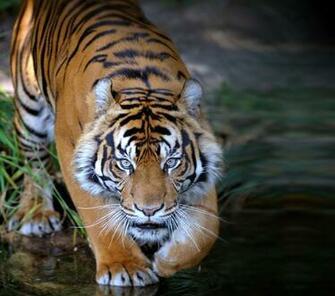 1600x1068px 981287 Animal Planet 24342 KB 06092015