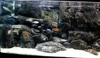 Fish For Sale PANGEA 3D AQUARIUM BACKGROUNDS