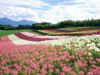 Japan Hokkaido Landscape 1 wallpaper