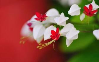 Very Cute Little Flowers Wallpapers   1280x800   183060