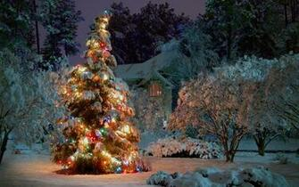 1920x1200 Outdoor Christmas tree desktop PC and Mac wallpaper