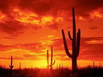 Download HQ Burning Sunset Saguaro National Park Arizona Wallpaper