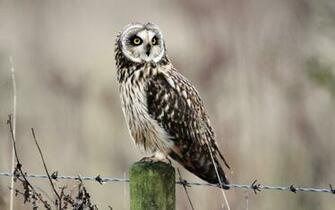 owl wild   HD Desktop Wallpapers 4k HD