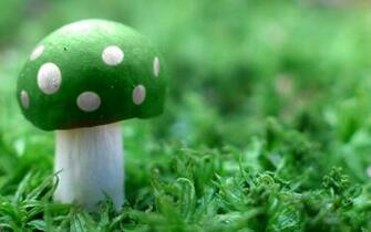 Green Mushroom Wide Wallpapers HD Wallpapers