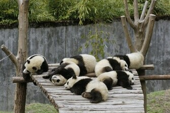 Cute Panda Bears HD Wallpapers Download Wallpapers in HD for your