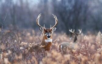 Beautiful Wallpapers For Desktop Deer wallpapers hd
