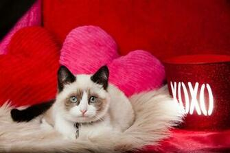 Valentines Day Cat