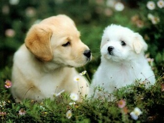WallpaperfreekS HD Cute Dogs Wallpapers 1600X1200