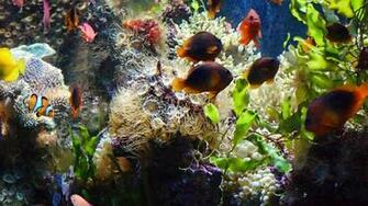mashababko Wallpaper Hd Aquarium