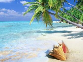hd wallpaper tropical beach shell   Background Wallpapers