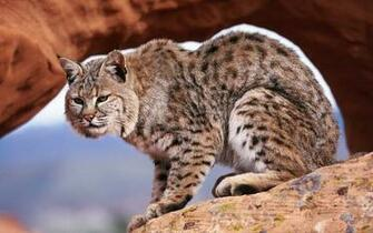wallpapers Animals Wallpapers For