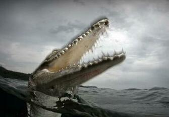 Crocodile Wallpaper   ForWallpapercom