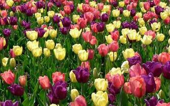 Desktop Spring Flowers