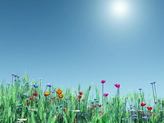 Pictures World Spring flower nice wallpaper