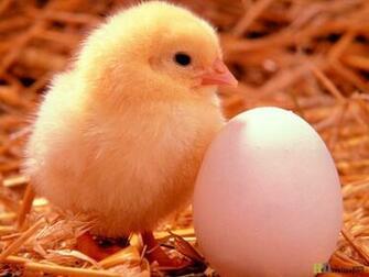 Happy Easter Egg day Desktop Backgrounds