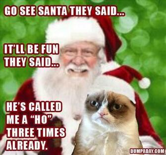 Laugh at 17 Funniest Grumpy Cat Pictures