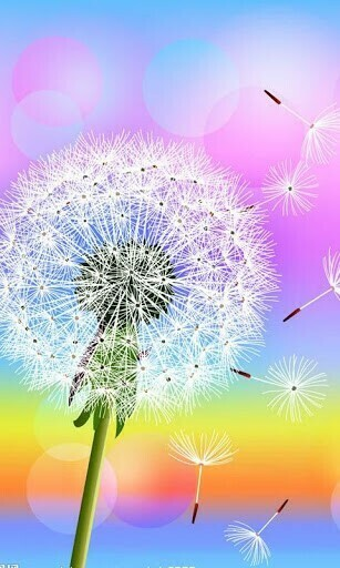 Go Back Gallery For Samsung Galaxy Dandelion Wallpaper