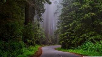 Redwood National Park California 4K HD Desktop Wallpaper for