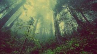 Deep Hazy Forest Wallpaper 3840x2160 ID57643