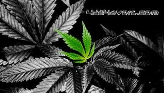 Cool Weed Leaf Marijuana Leaf Wallpaper Background