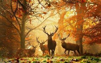 Deer Herd in Forest Autumn HD Nature Wallpaper HD Nature Wallpapers
