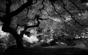 Black and White Wallpapers HD Black and White Scenic