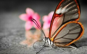 is under the 3d wallpapers category of hd wallpapers 3d butterfly