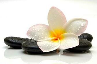flower spa drops stone plumeria Wallpapers