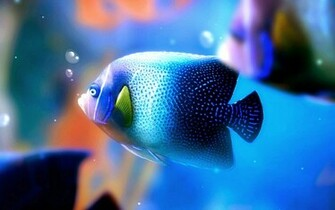 Most Beautiful Blue fish HD wallpapers
