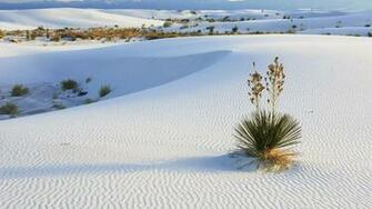 White Sands New Mexico wallpaper 12667