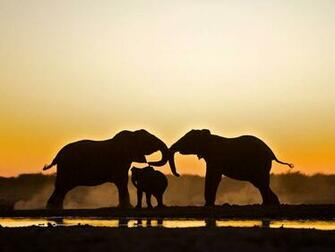 Picture of two adult elephants and a baby elephant in Namibia
