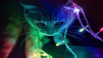 Cute 3D Kitten HD Wallpaper Stylish HD Wallpapers   Stylish HD