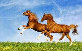horse in high resolution for get hd wallpapers desktop horse