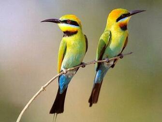 Two Small Birds On Branch Wallpaper 1024768   Birds Wallpapers