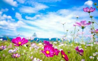 Pink Flowers Summer HD Wallpaper Widescreen For Desktop