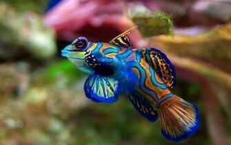 Unique Wallpaper Exotic Fish Wallpaper HD