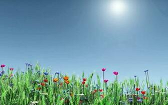 nature celebrates spring wallpaper for 1440x900 widescreen 606 8htm