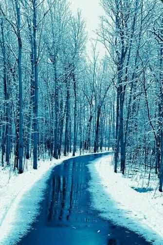 Forest Road Wallpaper snow winter iphone wallpaper in 2020