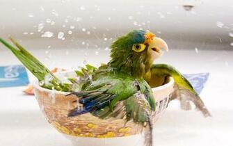cute bird cute and fast animal beautiful cat night killer animals