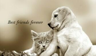 Best Friends Forever Wallpaper  yvt2 wallpapers55com   Best