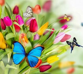Colorful Butterflies Wallpapers Gallery