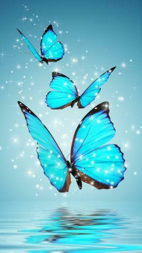 Blue Butterflies iPhone 6 Wallpaper iPhone 68 Wallpapers