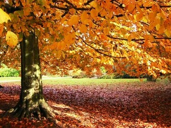 Autumn Wallpaper Pictures Images