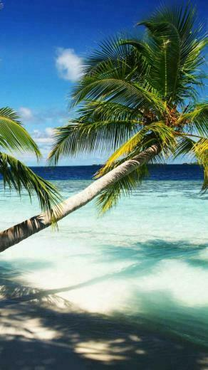 Wallpaper Maldives 4k 5k wallpaper holidays palms paradise
