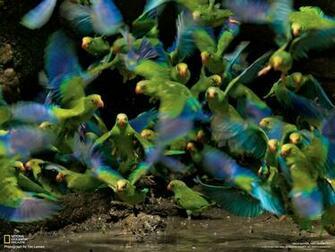 National Geographic Magazine   NGMcom
