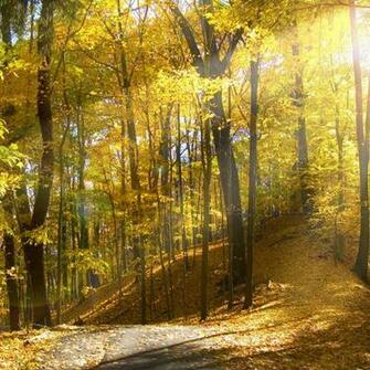 Sunny Autumn Forest download wallpapers for iPad