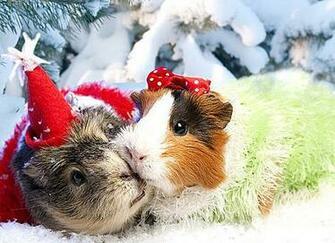 Christmas Animals Wallpaper
