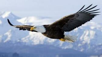 Eagle In Flight Computer Wallpapers Desktop Backgrounds 1920x1080